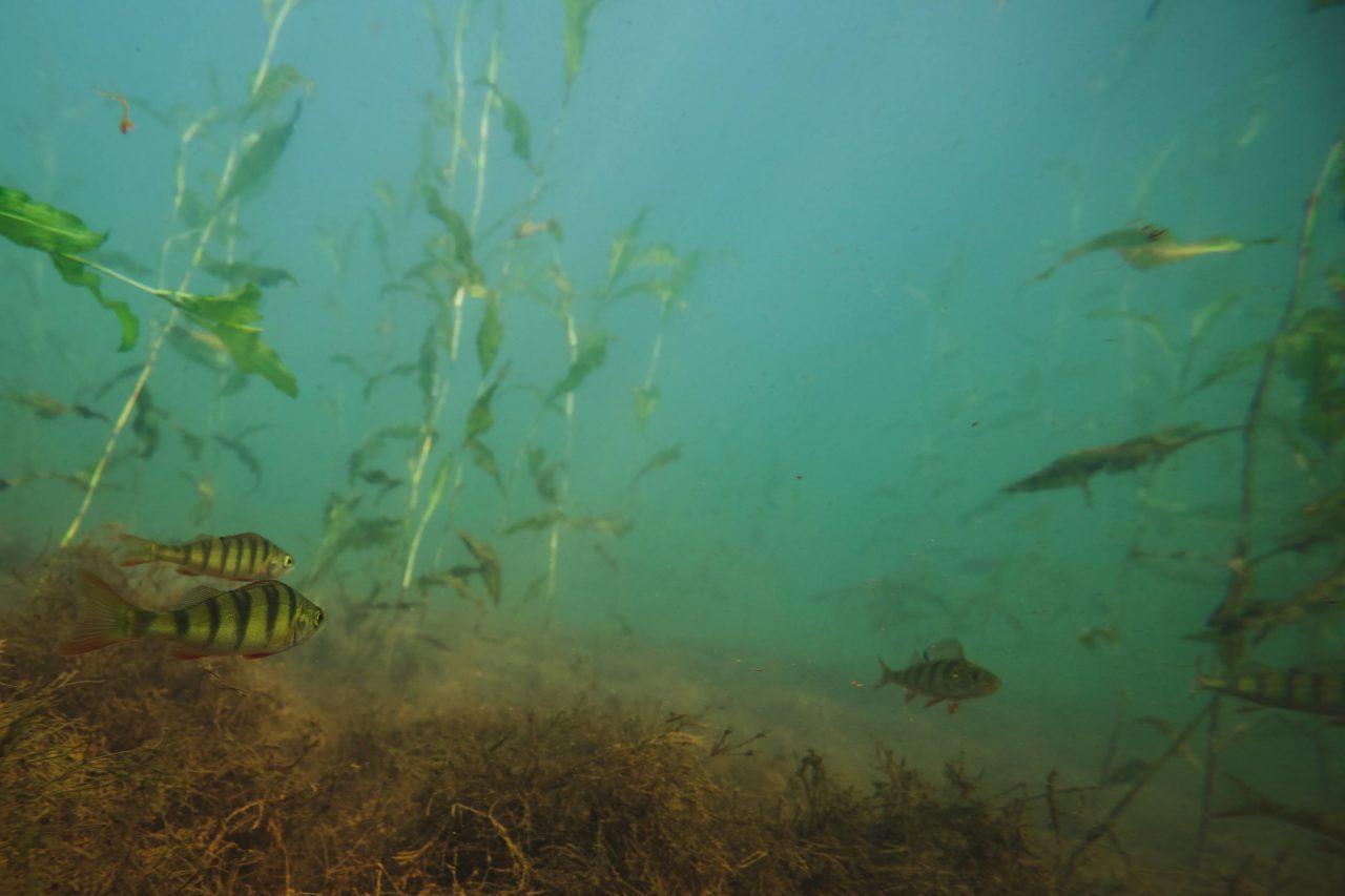 Gräbendorfer See - Hervorragend zum Apnoe-Tauchen geeignet
